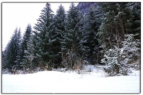 Foto di Canazei: paesaggio montano con neve
