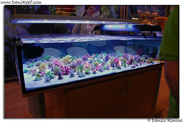 Korallen Zucht stand