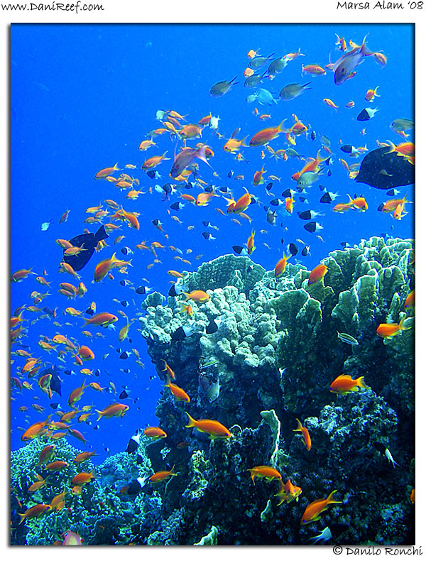 Reef Marsa Alam