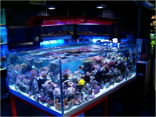 La luce in natura comparazioni con la luce in acquario danireef