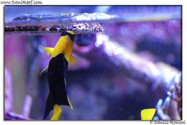Pesce che mangia dentro anello posizionacibo