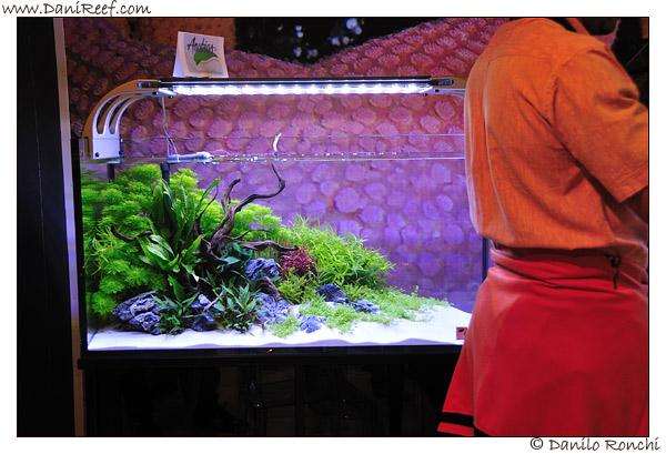 Reportage zoomark danireef portale dedicato all acquario