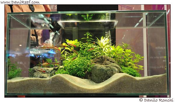 Acquari acqua dolce zen casamia idea di immagine for Acqua per acquario