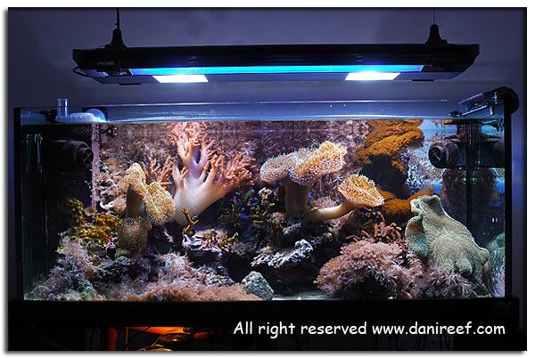 le integrazioni in un moderno acquario marino di barriera