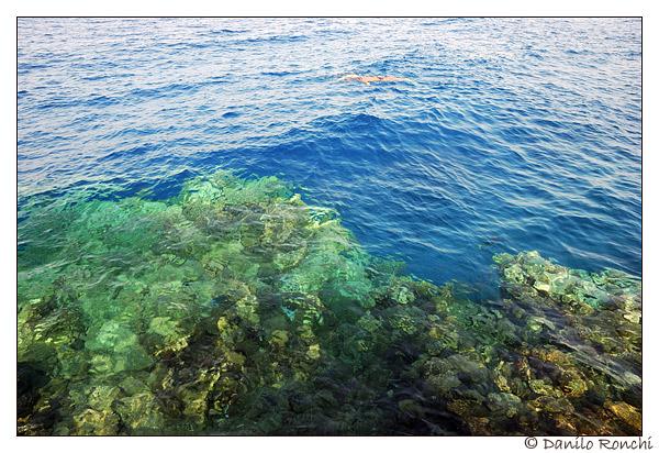 La Salinità in Acquario Marino