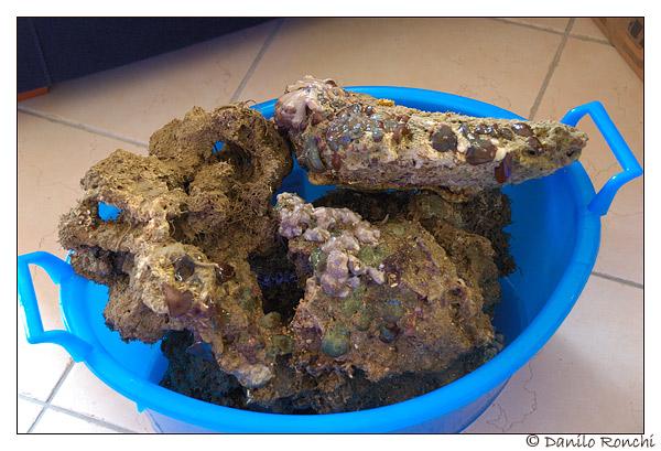rocce vive in soggiorno