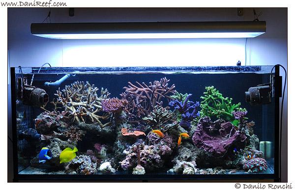 I coralli duri, per crescere al meglio, hanno bisogno di integrazioni costanti e di valori corretti di calcio, magnesio e durezza carbonatica.
