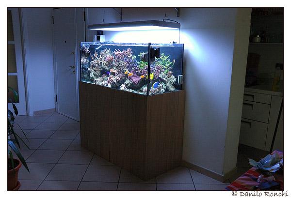 Acquario da casa grande allestimento di un acquario for Acquario in casa