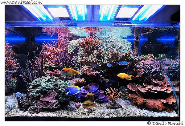 L 39 acquario marino di giancarlo molendini 2 anni dopo the for Acquario marino