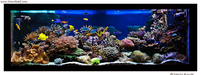 How to take picture of our aquarium photography course - Acquario per casa ...