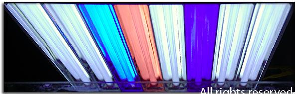 I nuovi neon T5
