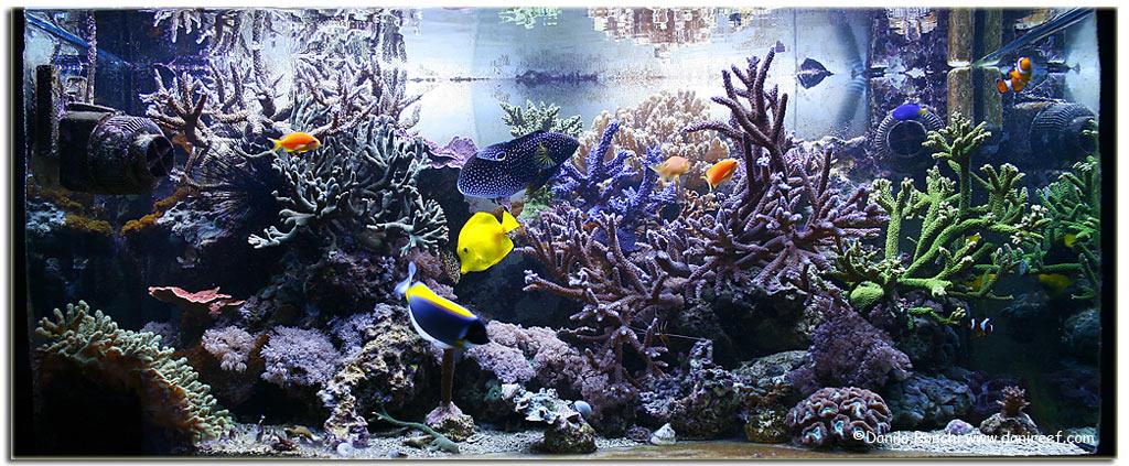 Discussioni varie consigli per allestimento acquario for Acquario marino 300 litri prezzo