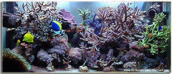Reattori di calcio korallin c 1501 e c 3001 recensione for Acquario 300 litri prezzo