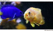 Alimentazione dei pesci – The fish feeding