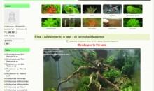 Elos Webring: Rare Aquatic Plants… la strada per la foresta!