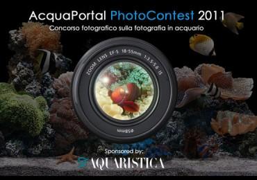 photocontestacquaportal