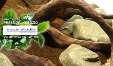 AquaStudio Roma presenta un allestimento live di un PlantAcquario sabato 14 gennaio