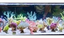 Interzoo 2012: Korallen Zucht