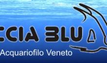 Oggi inizia la I Fiera Acquariofila di Cerea – non perdete il Workshop sulla fotografia in acquario di domenica!