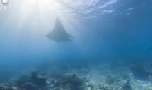 Google lancia il nuovo servizio di mappe subacquee