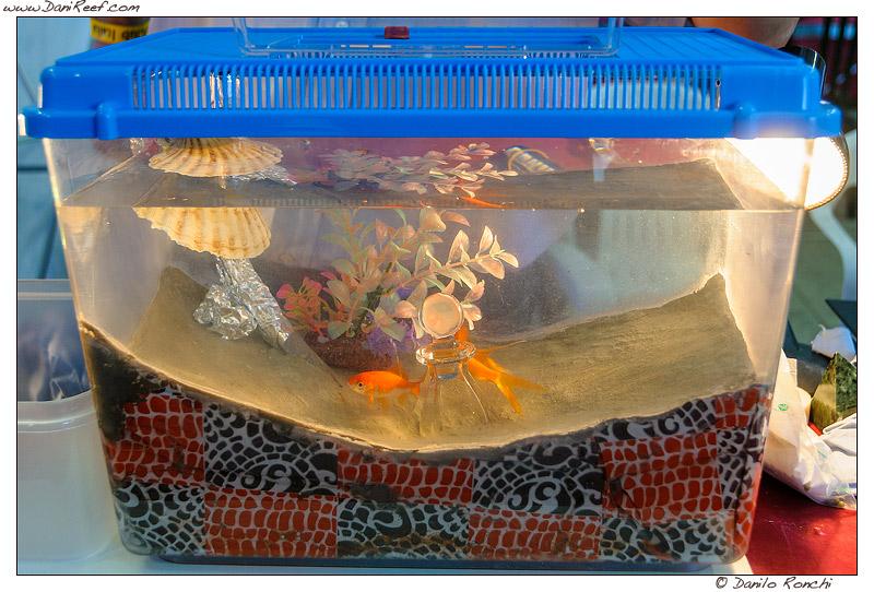 Pulire fondale acquario casamia idea di immagine for Depuratore per acquario tartarughe