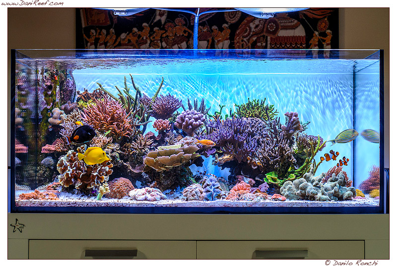 Andrea's Negusanti Marine Aquarium, tank of the month