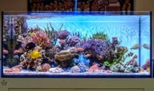 L'acquario marino di Andrea Negusanti
