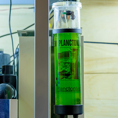 Preview: New Planctondose of Planctontech, the natural food