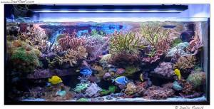 L 39 acquario del mese marino di bolognesi maurizio for Acquario marino 300 litri prezzo