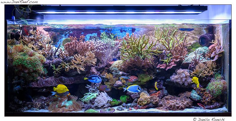 L'acquario del mese marino di Bolognesi Maurizio