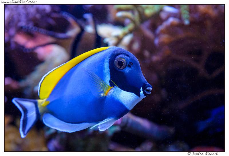 Pesci per acquario marino tropicale casamia idea di immagine for Acquario per pesci