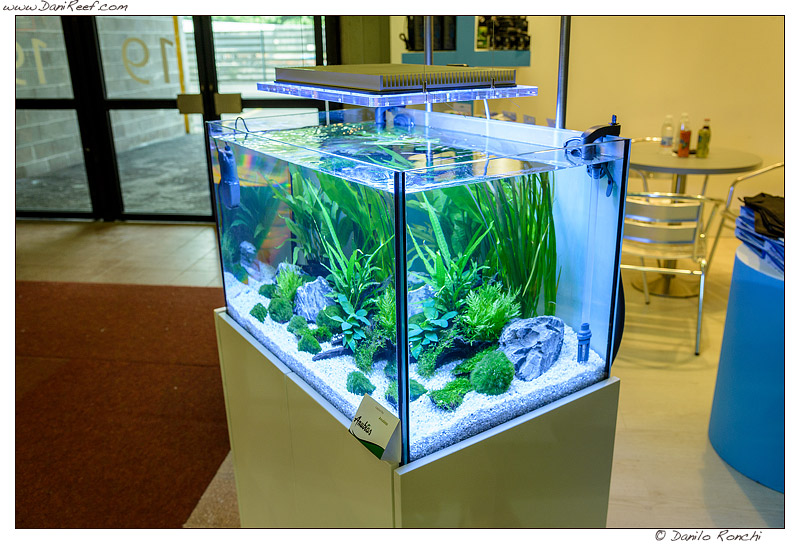 zoomark 2013 acquari in esposizione sicce anubias