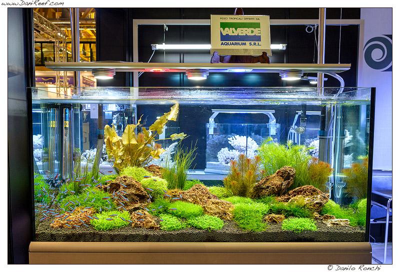 Plafoniera Led Per Acquario Acqua Dolce : Illuminazione led acquario dolce u idee di immagini casamia