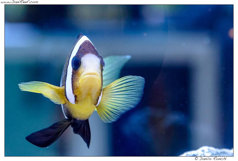 zoomark 2013 acquari in esposizione ceab