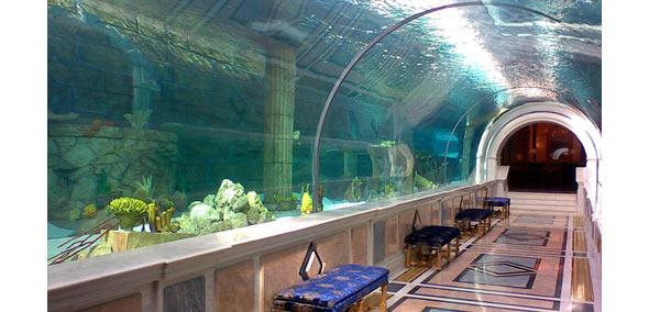 Acquario gigante archives danireef portale dedicato for Acquario in casa