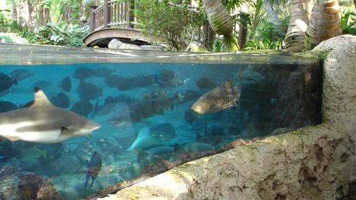 Acquari giganti in medio oriente danireef portale for Pesci finti per piscina
