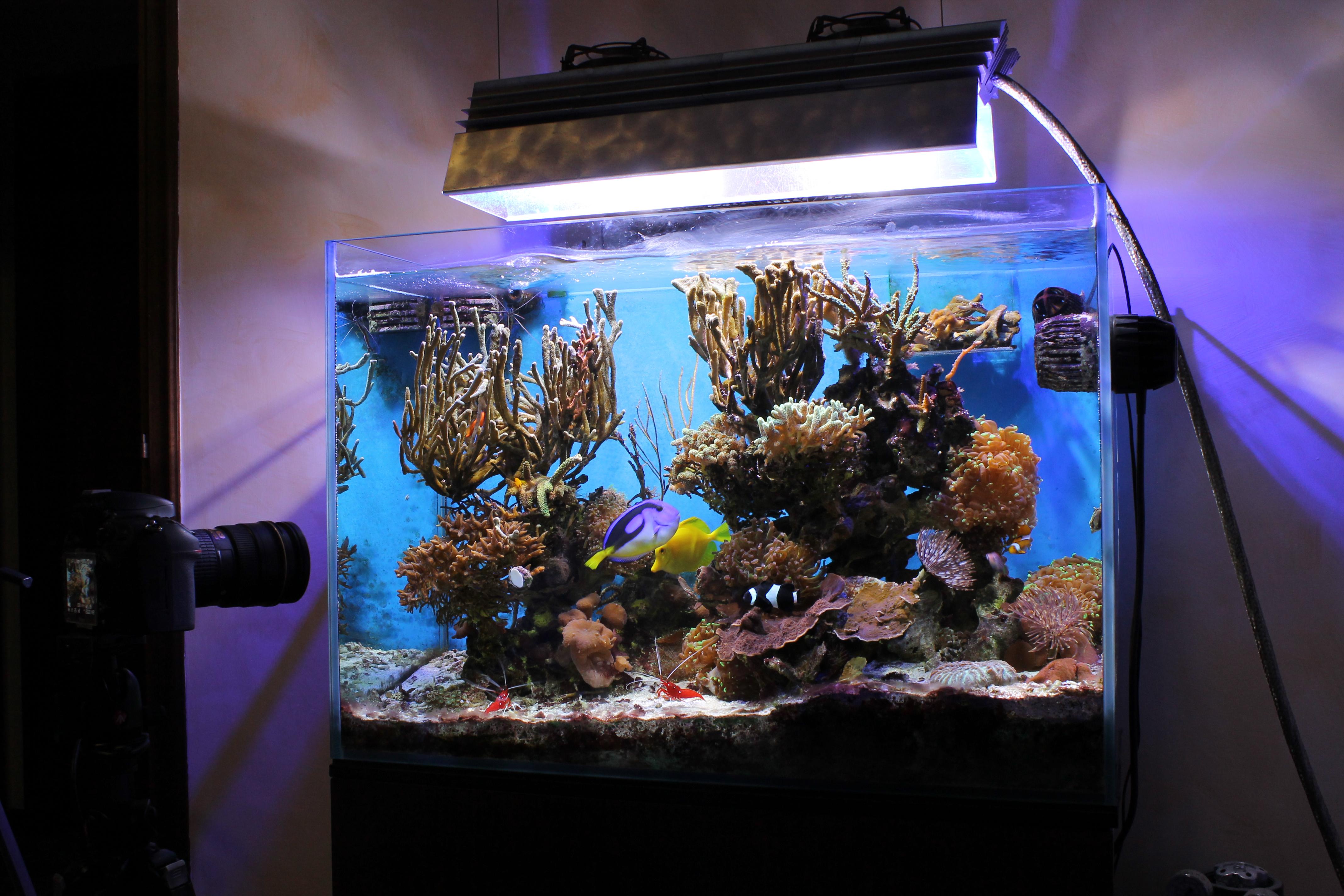 restyling acquario con aggiunta di sabbia viva caribsea