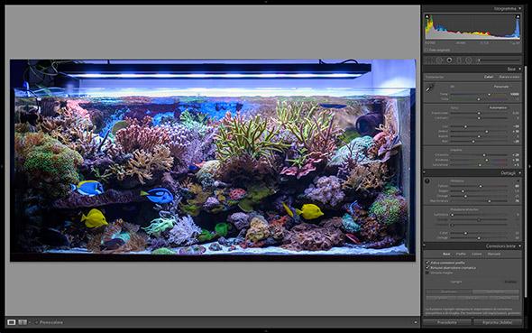 L'Acquario come fotografarlo: Corso di fotografia parte III – La postproduzione delle foto