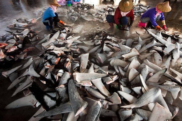 Pesca agli squali