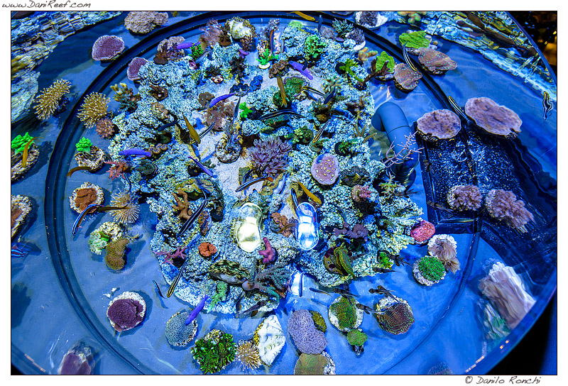 Coralli in vendita al Macna 2013