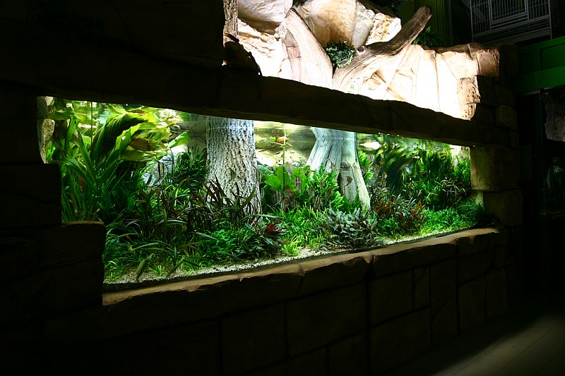 5400_Liter_Pflanzenaquarium_Oliver_Knott_01