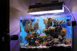Restyling acquario con aggiunta di sabbia viva caribsea for Acquario marino 300 litri prezzo