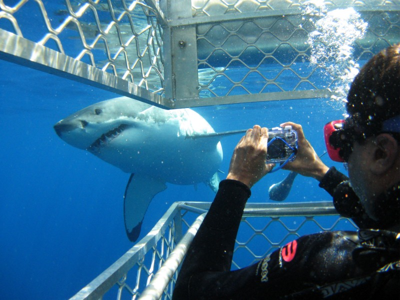 Visita agli squali, l'unica soluzione per evitarne l'estinzione?