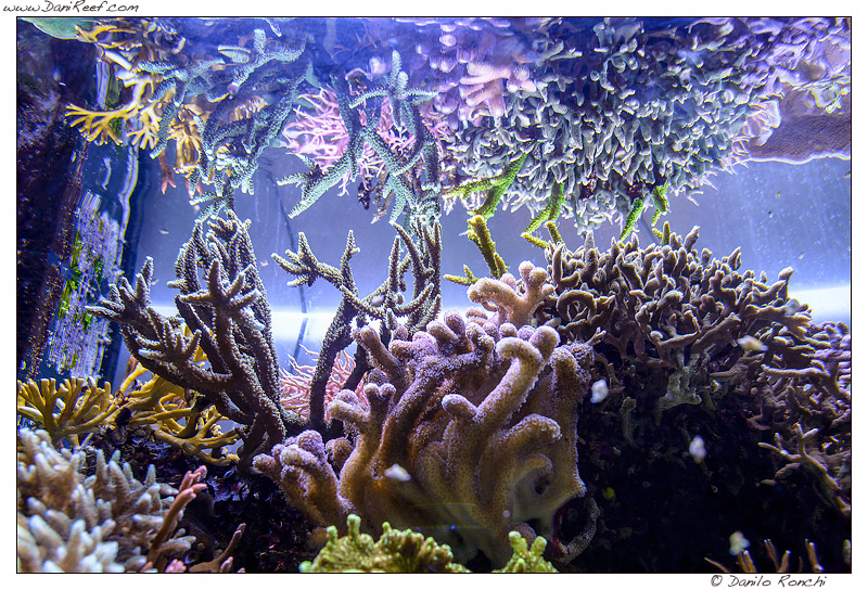 Acquario Marino DaniReef