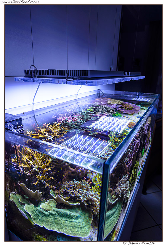 DaniReef Marine Aquarium with Sicce GNC AM 466