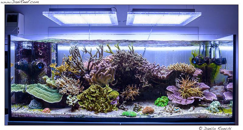 Tunze Turbelle Nano Stream 6095 in acquario marino, Recensione