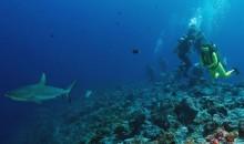 La pesca eccessiva degli squali sta danneggiando le barriere coralline