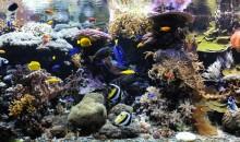 L'acquario di barriera corallina del Museo di Scienze Naturali di Bolzano compie 15 anni: sviluppo ed esperienze