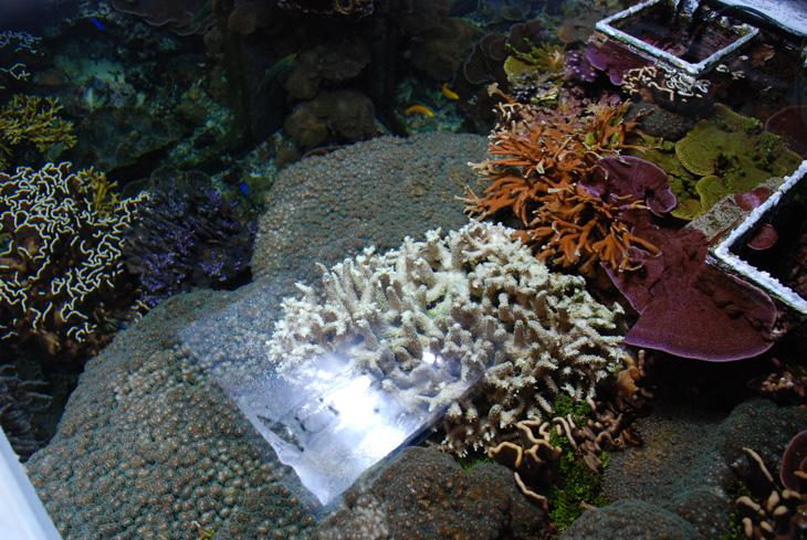 coralli acquario di barriera corallina del Museo di Scienze Naturali dell'Alto Adige a Bolzano