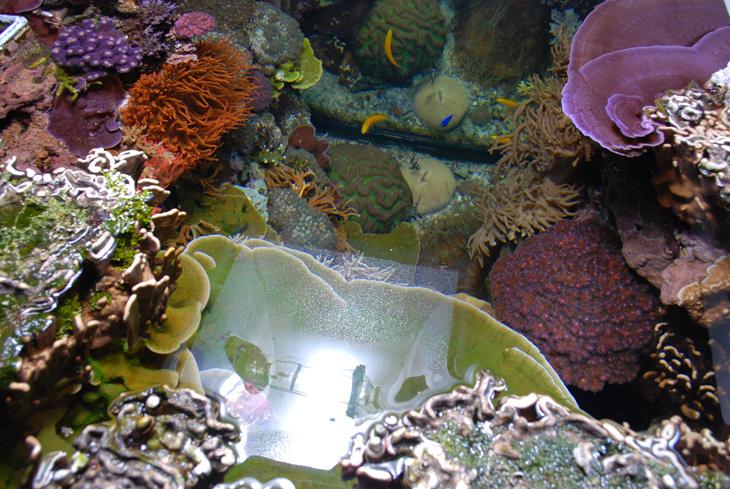 acquario di barriera corallina del Museo di Scienze Naturali dell'Alto Adige a Bolzano coralli